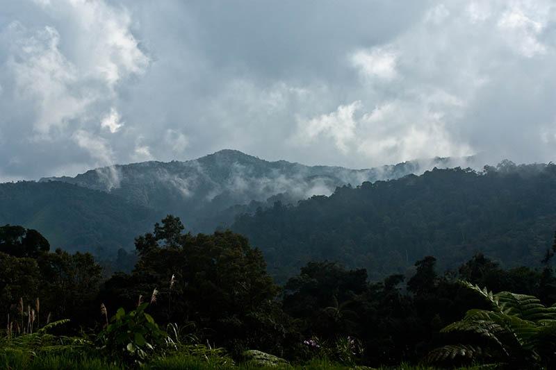 Džungle – místo které nikdy nespí